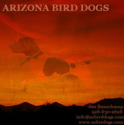 Az Bird Dog Kennels