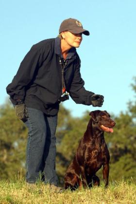 DreamMeyer Labradors 2