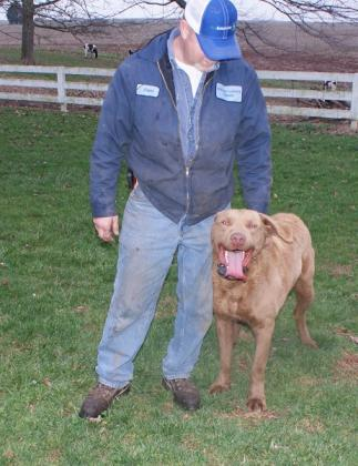 Rouse Farms Kennels--Chesapeake Bay Retrievers