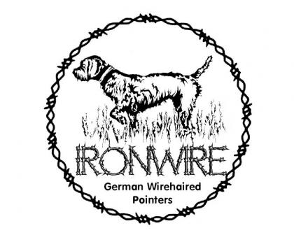 IronWire German Wirehaired Pointers