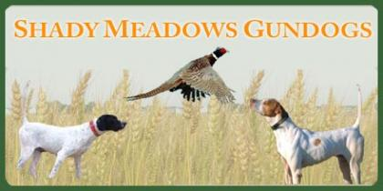 Shady Meadows Gundogs