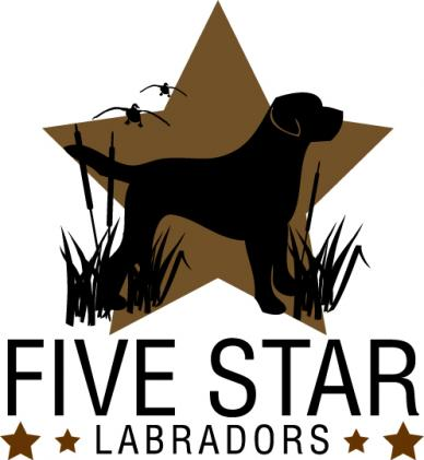 Five Star Labradors