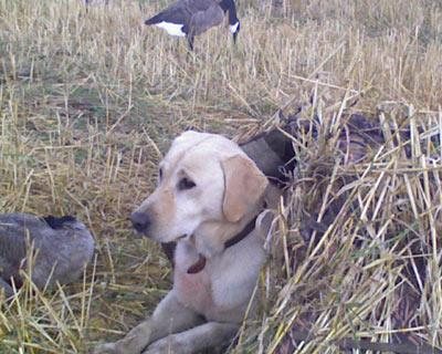 Snake River Retrievers