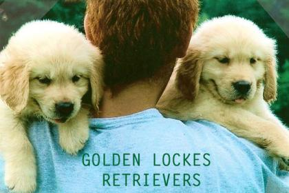 Golden Lockes Retrievers