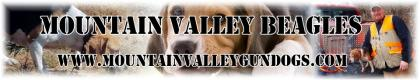 Mountain Valley Gun Dogs