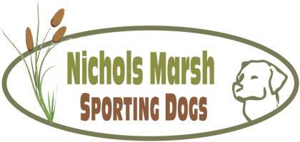 Nichols Marsh Sporting Dogs