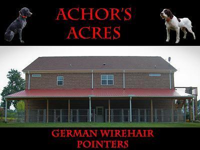 Achor's Acres Wirehairs