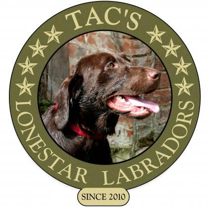 TACS Lone Star Labradors