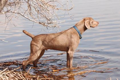 Helvete-Hund Kennel