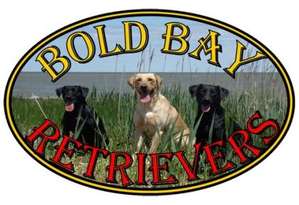 Bold Bay Retrievers