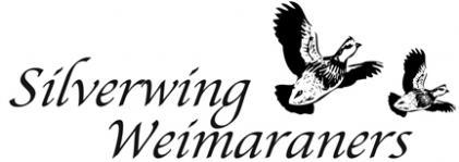 Silverwing Weimaraners