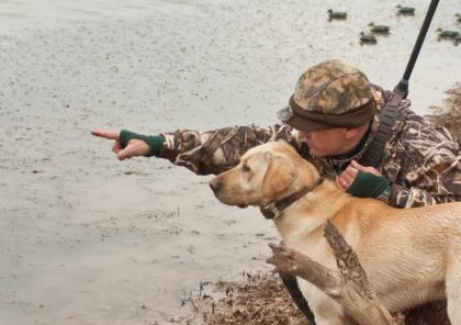 RED OAK LABRADOR RETRIEVERS