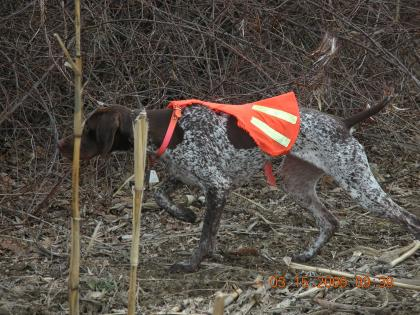 High Ridge Gun Dogs