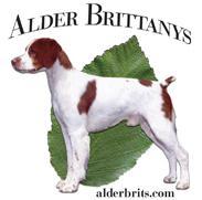 Alder Brittanys