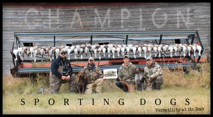 Champion Sporting Dogs