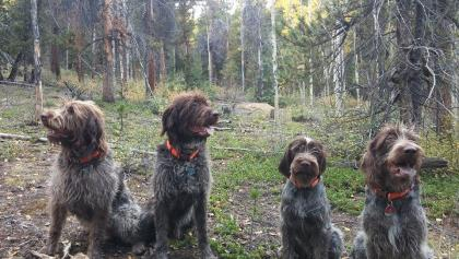 High Country Griffs