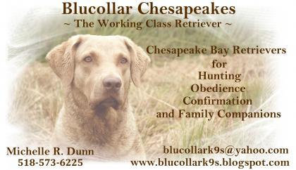 Blucollar Chesapeakes