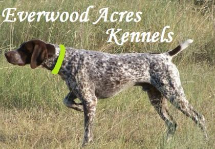 Everwood Acres Kennels
