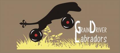 Grain Driver Labradors