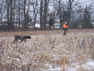 South Pines German Shorthair Pointers