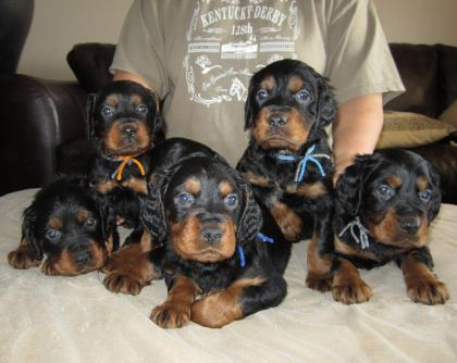 Draco Kennels