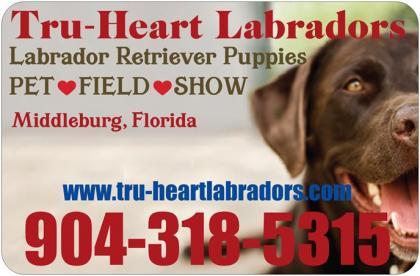 Tru-Heart Labradors