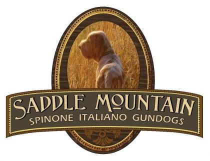 Saddle Mountain Spinone