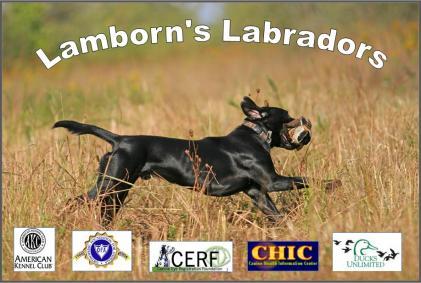 Lamborns Labradors
