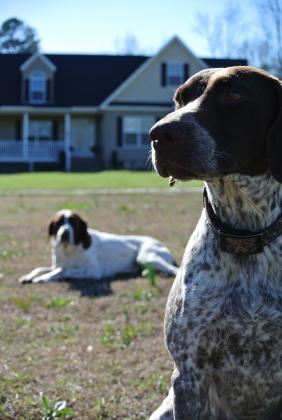 Veach Kennels GSP