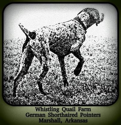 Whistling Quail Farm