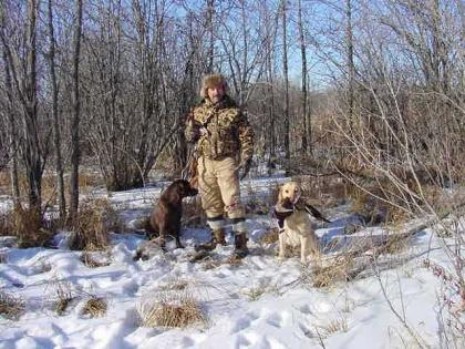 Bird Dog Kennels AKC Started Retrievers