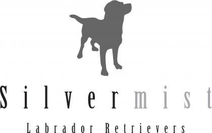 Silvermist Labrador Retrievers