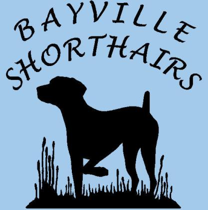 Bayville Shorthairs