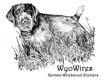 WyoWires German Wirehaired Pointers