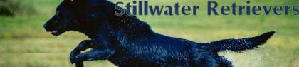 Stillwater Retrievers