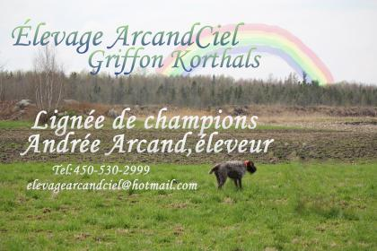 élevage ArcandCiel kennel