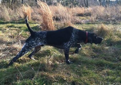 Adventure Gundogs