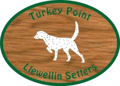 Turkey Point Llewellin Setters