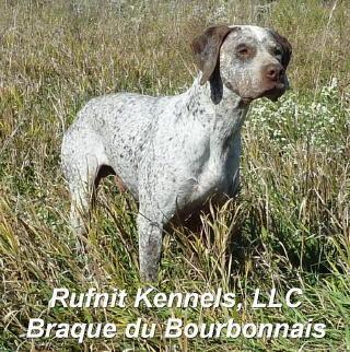 Rufnit Kennels, LLC  Braque du Bourbonnais