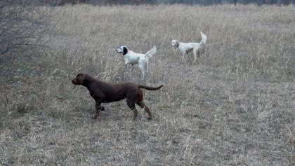 Dawson's Hunting Kennels