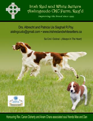 Aislingcudo Irish Red and White Setters
