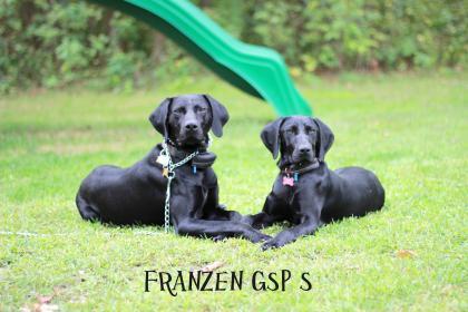 Franzen GSP's