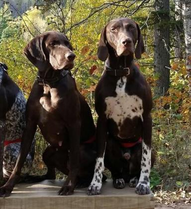 Five J Gun Dogs
