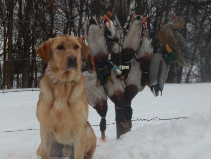 Duck Buster Kennels