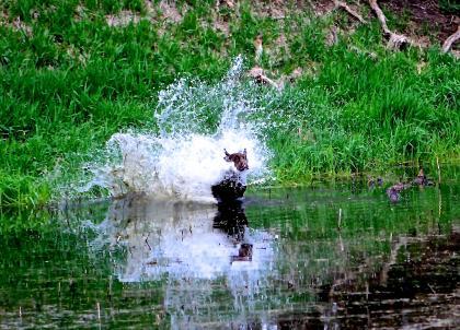 Water Dawgs Kennel