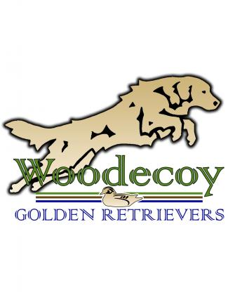 Woodecoy Golden Retrievers and WP Griffons