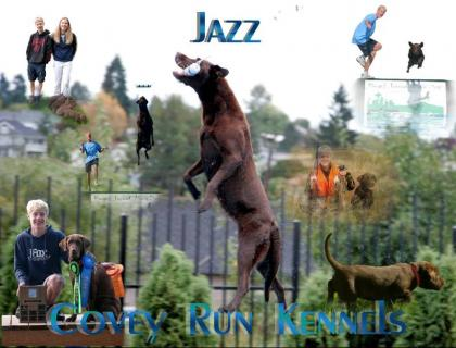 Covey Run kennels