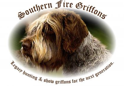 Southern Fire Wire-haired Pointing Griffons