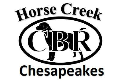 Horse Creek Chesapeakes