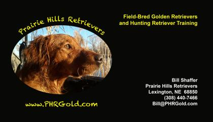 Prairie Hills Retrievers -Puppies and Stud Service